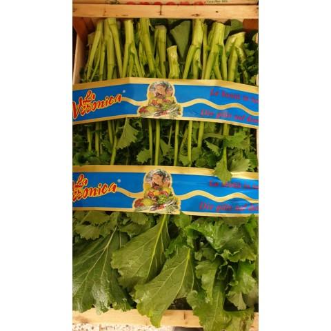 Brokolice divoká  Itálie PQ kg