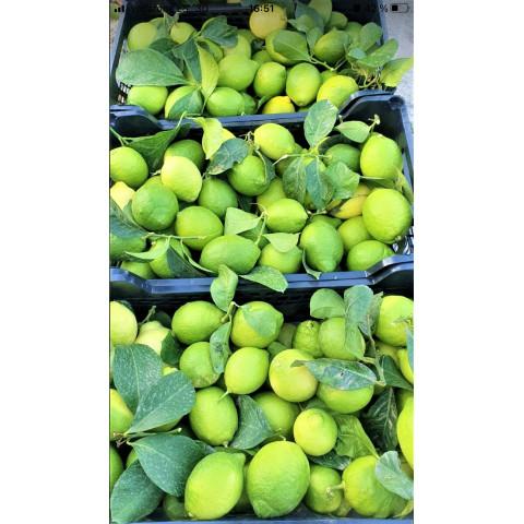 Citrony Primofiori zelené s listem Španělsko kg