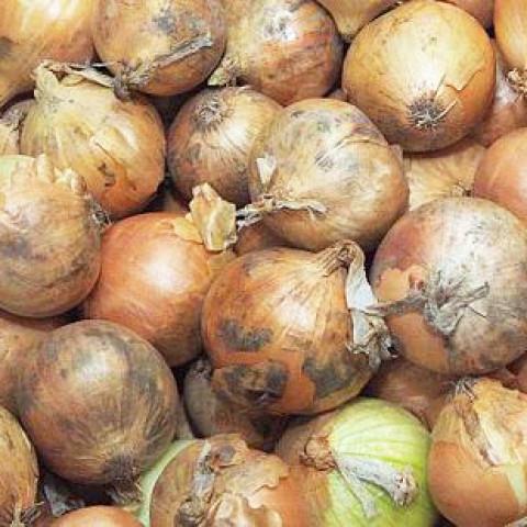 Cibule kuchyňská 1 kg