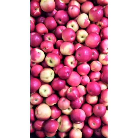 Jablka Idared sady Bílé Podolí CZ cena za 1 kg
