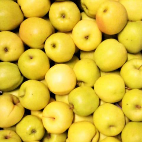 Jablka Golden Delicious 1 kg CZ