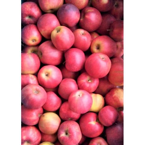 Jablka Jonagored sady Bílé Podolí 1 kg