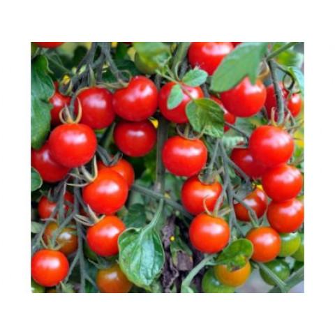 Sadba Rajče cherry červené rybízové tyčkové Currant  Sweet 1 ks