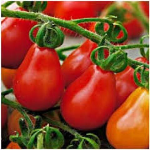 Sadba rajče červené hruškové tyčkové Radana 1 ks