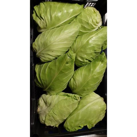 Zelí bílé špičaté cena za kg Itálie PQ