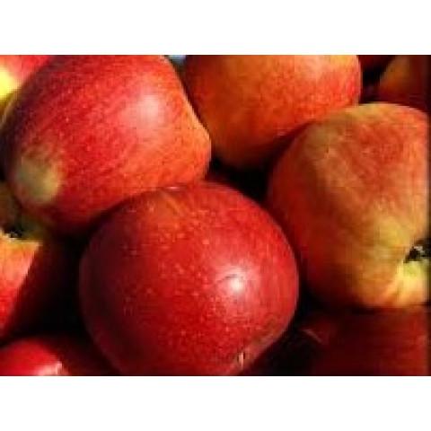 Jablka Bohemia kal. 75 - 80 CZ kg
