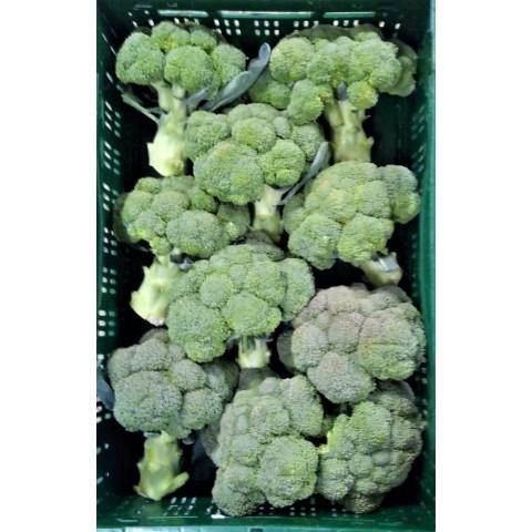 Brokolice CZ 500 g