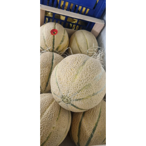 Meloun Cantaloupe Itálie PQ kg