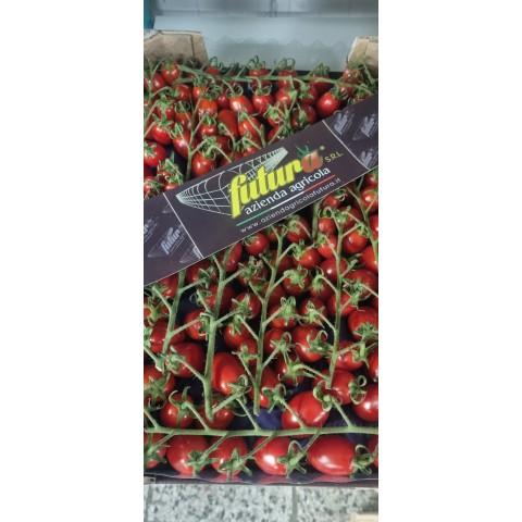 Rajčata cherry červená datlová keřík PQ kg