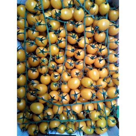 Rajčata cherry žlutá kulatá keřík PQ cena za kg