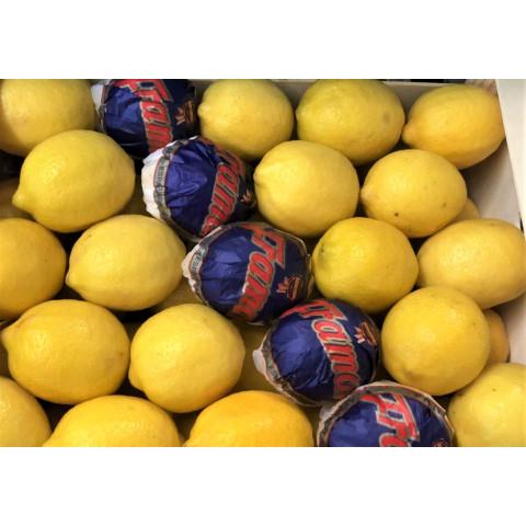 Citrony Eureka Španělsko kg