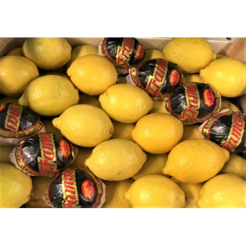 Citrony Primofiori Španělsko kg