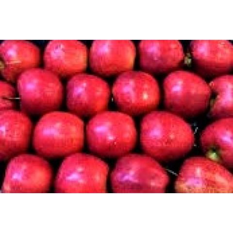 Jablka Jonaprince kalibr 75 - 80  CZ kg