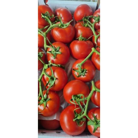 Rajčata keříková Sicílie kg PQ