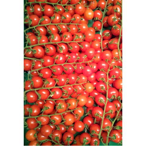 AKCE ČESKÁ Cherry keříková rajčata Nelinka cena za 0,50 kg