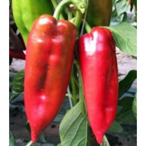 Sadba paprika kapie červená Radmila 1 ks