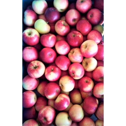 Jablka Podolská CZ kg
