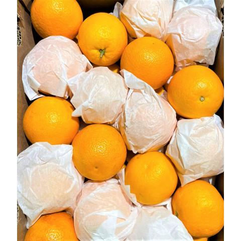 Pomeranče střední PQ kg