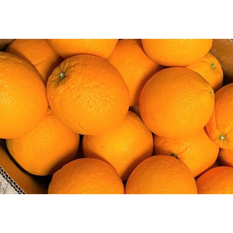 Pomeranče velké PQ kg
