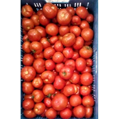Rajčata kulatá CZ kg