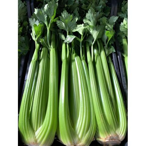 Celer řapíkatý  cena za kg PQ